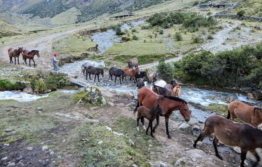 Horses on the Inca Trail