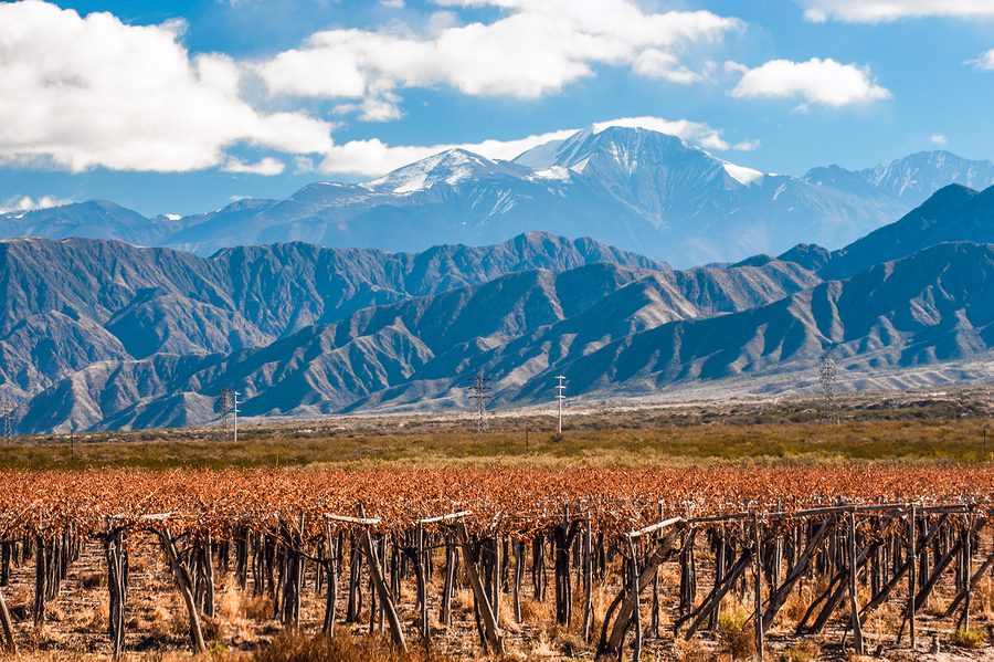 Volcano Aconcagua and Vineyard. Aconcagua is the highest mountain in the Americas.